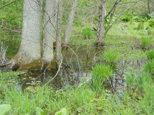 Floodplain wetland in Chester County, PA
